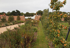 2018_09_0791 (petermit2) Tags: appletree apple apples orchard tree walledgarden clumberpark clumber nottinghamshire nationaltrust nt