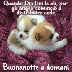 The Worlds Most Recently Posted Photos Of Buonanotte And Link