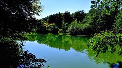 Etang du Sépey (Diegojack) Tags: vaud suisse cossonay d500 nikon nikonpassion eau reflets plandeau sepey étang