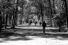 Englischer Garten in München (Luiz Contreira) Tags: englischergarteninmünchen munich munique münchen germany alemanha deutschland europe europa garden garten blackwhite bw german people pessoas sun shadows