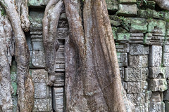 Traces of Ta Prohm (mickyates) Tags: 2490mm angkor architecture bengsimeth cambodia falmouth history keosarath leica lightroom ma mickyates roadtrip sl taprohm temple traces travel varioelmarit candid documentary reportage trees ©2018 ©mickyates krongsiemreap siemreapprovince kh