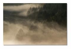 Paysage F16 Def Bd2 Rd1 IMG_8172 (thierrybarre) Tags: forêt bois arbre brume brouillard sapins bokeh mood ambiance landscape paysage montagne colline alpage