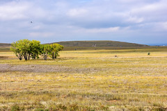 Rocky Mountain Arsenal, Colorado (MarkusR.) Tags: mrieder markusrieder nikon d7200 nikond7200 vacation urlaub fotoreise phototrip usa 2017 usa2017 colorado rockymountainarsenal nationalwildliferefuge denver natur nature prairie wetland woodland wildlife landscape landschaft