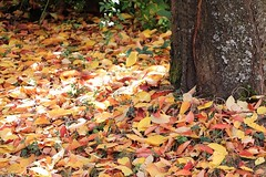 Autumn sunlight (frenziM´s little world) Tags: autumn sunray sunlight nature tree