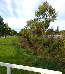 photo2468 (southglosguytwo) Tags: 2018 cameraphonephoto grass hometown october sky southgloucestershire trees yate linkroad riverfrome