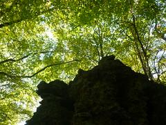 P1210204 (Jörg Paul Kaspari) Tags: wanderung wandertour herbst autumn fall 2018 diebergkraterseetour lava lavaklippe lavaklippen buchenwald mosenberg