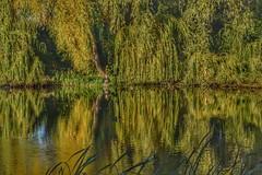 Tales of the Impressionist fly-fisherman. (gjphilst) Tags: landscape morning lake fisherman d5600 nikon northamptonshire