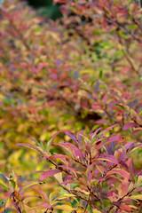 Colours (Blasékite) Tags: leaves colours colors contrast colourful colorful plant