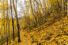 Golden path (palbion) Tags: blossomsfoliage twinlakes colorado unitedstates us
