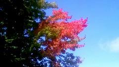 Autumn Color -TMT (Maenette1) Tags: autumn colors tree sky neighborhood menominee uppermichigan treemendoustuesday flicker365 allthingsmichigan absolutemichigan projectmichigan