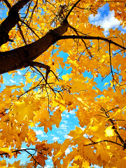 Осенние цвета. Autumn colors. (agakaandrew) Tags: autumn minsk belarus city nature cloudy day облачно осень город природа минск беларусь цвета colors