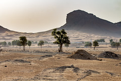 Mleiha Archaeological Centre - Dubai, UAE (Piotr Kowalski) Tags: dubai dubaj travel turystyka zjednoczoneemiratyarabskie zea uae emirates city attractions wakacja vacation maleha desert