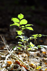in the woods (III) (DaLi-A) Tags: wald wood herbst autumn bokeh thüringen neumühle pflanze plant grün green pentax k30 50mm pentaxlife