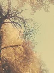 Gold polish atumn #atumn #goldenleaves #trees #nature #poland  Złota polska jesień #złotapolskajesień #jesień2018  #drzewa #natura #polskajestpiękna #pięknostworzenia #złoteliście #warszawa #polska (gosiawilinska@yahoo.co.uk) Tags: poland złotapolskajesień warszawa złoteliście trees nature goldenleaves polska polskajestpiękna drzewa jesień2018 pięknostworzenia natura atumn
