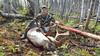 Newfoundland Caribou Hunt, Moose, Bear Hunting  8