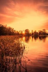 November Sunset (aaron_nikon_photography) Tags: sunset sun autumnleaves autumnscape fall leaves clouds lake trees water nature park parklake lurganpark nikond810 nikon november autumn