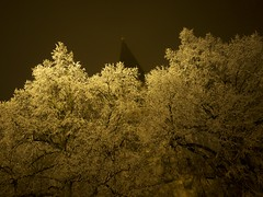 (xelladrillox) Tags: olympus omd em1 1240mm winter darkness night light frozen tree