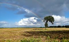 Baum mit Regenbogen (antje whv) Tags: bäume trees wolken clouds felder fields maisfeld regenbogen rainbow