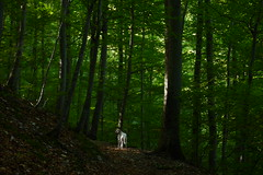 Bad Urach Wasserfall (mireiatarres) Tags: trees green forest bosque verde arboles madera camino