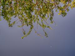 Mullum Moonum Veyilodu. (Prabhu B Doss) Tags: fujifilm gfx50s gf3264mm thorn crescent moon travelphotography usilimpatti usilampatti