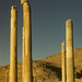 1960 Persepolis columns