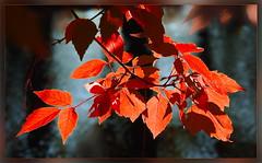 Autumn (Harald52) Tags: herbst laubfärbung laub jahreszeiten natur