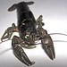 Orconectes sanbornii (freshwater crayfish) (Newark, Ohio, USA) 2
