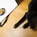 Stock Photography -Eine Schüssel mit Gemüse in der Fotobox, schwarzer Labrador im Vordergrund