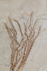 Found Objects: Curly Twigs (Jill Clardy) Tags: brown dead marble sticks stilllife tile twigs 201810029l8a7366edit 365the2018edition 3652018 day275365 02oct18