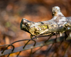 Rotting and Decaying Wood. (SteveCrowhurst 2011) Tags: rotting decaying light colours