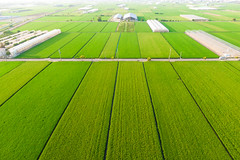 farmland|Mavic 2 zoom (里卡豆) Tags: 臺灣 tw 臺灣省 台灣 taiwan aerial photography aerialphotography dji 大疆 空拍機 mavic2 drone mavic2zoom