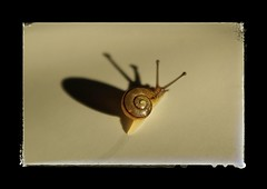 The Shadow of a Small Snail (Jan Hovjacký) Tags: snail shell animal macro canon shadow