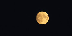 Moonrise fly-by 22 Oct 2018 (Sculptor Lil) Tags: moonrise flyby moon london canon700d waxinggibbous dusk handheld