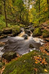 Padley Gorge (Joel-Spencer) Tags: padleygorge peakdistrict water flowing river stream autumnleaves trees
