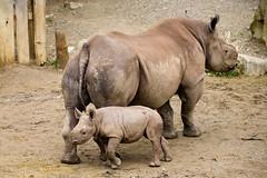 I Got Your Back (Eric Tischler) Tags: black rhino cleveland nia