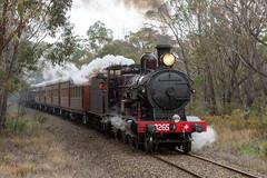 2018-10-12 NSW Rail Museum 3265 Buxton Forest (deanoj305) Tags: buxton newsouthwales australia au