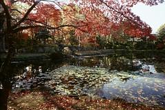 Gyokusenkan park (threepinner) Tags: mamiya universal press sekor 50mm f63 positive iso100 selfdeveloped iwamizawa northernjapan gyokusenkanpark park pond leaves 玉泉館跡地公園 岩見沢 北海道 北日本