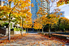 Autumn Leaves in Yaletown Area 2018