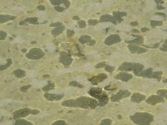 SHADOWS (photodittmer) Tags: capecod massachusetts water beach ocean sand shadow shallow