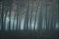introducción a los sueños sin fondo (jotaaguilera) Tags: nikon d810 sigma2470mmf28exdg paisaje landscape arbol tree trees niebla mist fog foggy forest wood bosque mistery misteryous misterioso luz light dark darkness darkening solitude soledad atmosfera atmosphere nature naturaleza mood moodiness otoño autumn neblina grey gris hoja leaf fall