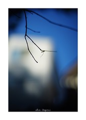 2018/9/23 - 17/18 photo by shin ikegami. - SONY ILCE‑7M2 / Carl Zeiss C Sonnar T* 1.5/50 ZM (shin ikegami) Tags: sky 空 紅葉 silhouette シルエット macro マクロ 井の頭公園 吉祥寺 autumn 秋 sony ilce7m2 sonyilce7m2 a7ii 50mm carlzeiss sonnar csonnar50mmf15 tokyo sonycamera photo photographer 単焦点 iso800 ndfilter light shadow 自然 nature 玉ボケ bokeh depthoffield naturephotography art photography japan earth asia