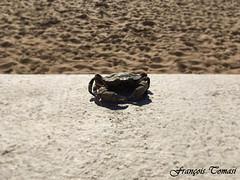 Les pinces de l'océan (François Tomasi) Tags: crabe crab animal françoistomasi yahoo google flickr justedutalent
