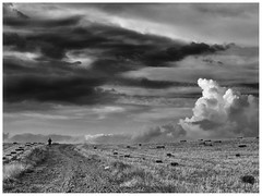 The Loneliness of the Long Distance Runner (una cierta mirada) Tags: thelonelinessofthelongdistancerunner cinema landscape nature bnw blackandwhite clouds cloudscape sky paths runner road outdoors lumix panasonic dmcgx8 g vario 1260mm f3556 asph power ois
