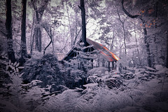 'Forrest Life' Oslob, Cebu Philippines (Infrared Photography- False Colors) ​ (jc reyes) Tags: travels ir infrared infraredmaster digitalinfrared infraredimages infraredworld infraredphoto irfilter irphotography colorinfrared falsecolors invisiblelight creativeir creativeiramericas creativeireurope iginfrared photography infraredcamera infraredlandscape kolarivision jawdroppingshots epiccaptures igworld nikon nikonphotography nikkor cebu forrest philppines ​