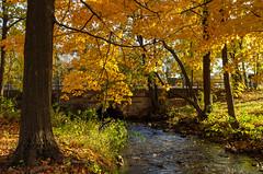 No troll (P.Woolley) Tags: ellispond norwoodma massachusetts fall fallcolors autumn autumncolors mapletree mapleleaves nikon d7000 nikond7000