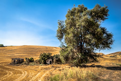Whitman County, Washington (paccode) Tags: solemn d850 landscape bushes brush serious quiet shack summer abandoned barn tree colorful grass house washington home scary forgotten farm creepy field colfax unitedstates us