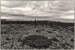 'Great Slave Lake' (Canadapt) Tags: bw lichen rock lake forest fire clouds nwt canadapt