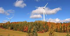 AUTUMN SCENERY | FALL COLOURS | HORIZONTAL AXIS WIND TURBINES | GASPESIE | QUEBEC | CANADA (C C Gosselin) Tags: autumn scenery | metis area reford gardens gaspesie quebec canada canon 7d 7dmarkii rebel t2i canonrebelt2i eos canon7d markii rebelt2i canonrebel canont2i eost2i eos7d eos7dmarkii mark 2 mark2 eos7dmark2 canon7dmarkii ii canoneosrebelt2i canoneos7d canoneos ph:camera=canon fall colours horizontal axis wind turbines