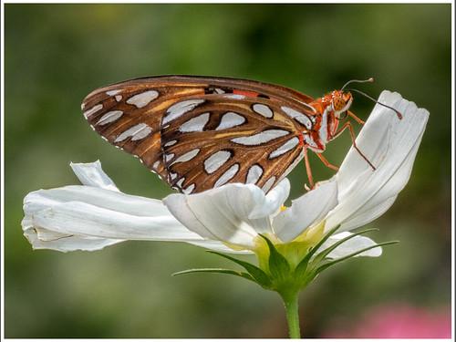 Winged Flower by James Norton - Class B Digital -  Award- Sept 2018
