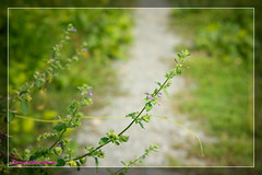 Autumn road (Hương Thảo (ake)) Tags: pentax vivitar wildflower closeup